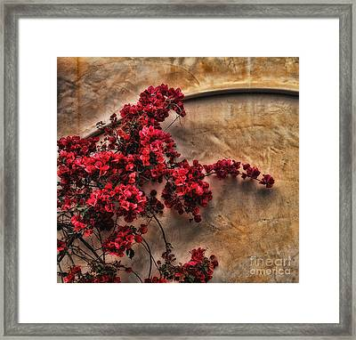 Red Bougainvilla Vine On Stucco Wall Framed Print by Clare VanderVeen