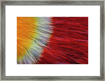 Red Breasted Toucan Framed Print by Darrell Gulin