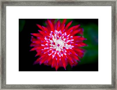 Red Bromeliad Painted Framed Print by Rich Franco