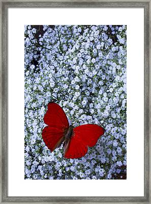 Red Butterfly And Baby's Breath Framed Print by Garry Gay