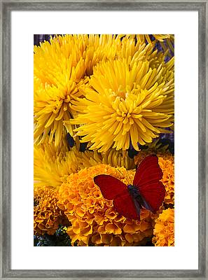 Red Butterfly On African Marigold Framed Print by Garry Gay