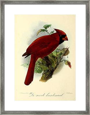 Red Cardinal Framed Print by J G Keulemans