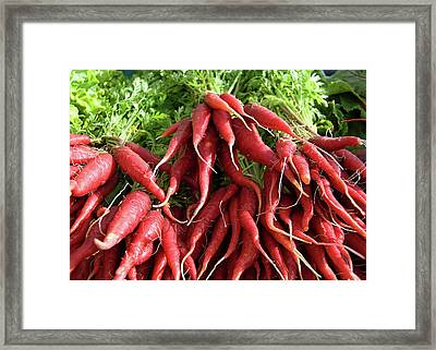 Red Carrots Framed Print by Charlette Miller
