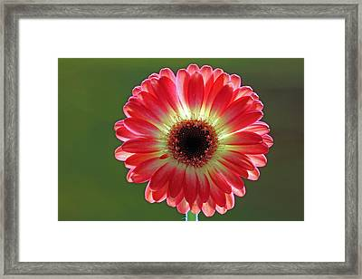 Red Celebration Framed Print by Juergen Roth