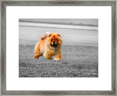 Red Chow Framed Print by Jai Johnson