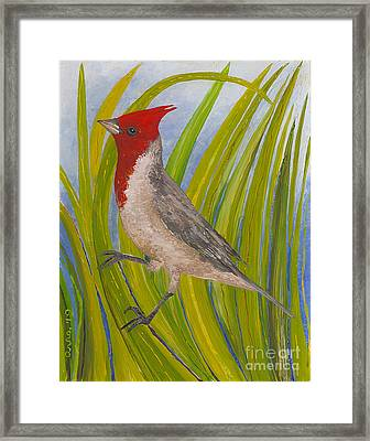 Red-crested Cardinal Framed Print by Anna Skaradzinska