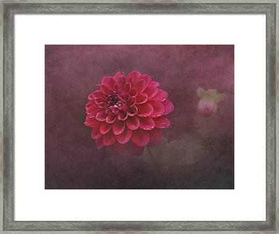 Red Dahlia Framed Print by Angie Vogel