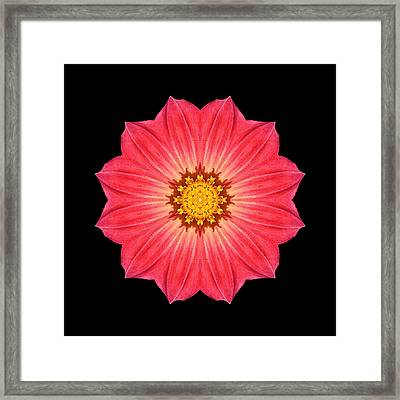 Red Dahlia Hybrid I Flower Mandala Framed Print by David J Bookbinder