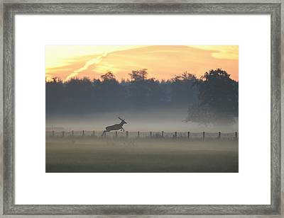 Red Deer Stag Jumping Fence Framed Print by Ton Schenk