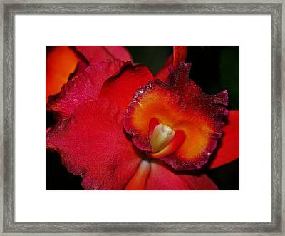 Red Depth Framed Print by Liudmila Di