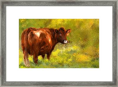 Red Devon Cattle On Green Pasture Framed Print by Lourry Legarde
