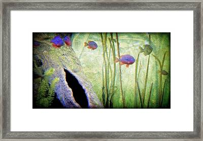 Red Eared Bluegills Framed Print by Rosemarie E Seppala