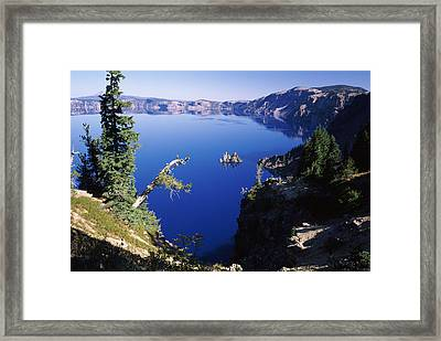 Red Elderberry Sambucus Racemosa Framed Print by Panoramic Images