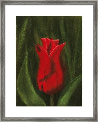 Red Elegance Framed Print by Anastasiya Malakhova