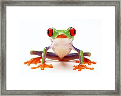 Red-eye Tree Frog 2 Framed Print by Lanjee Chee