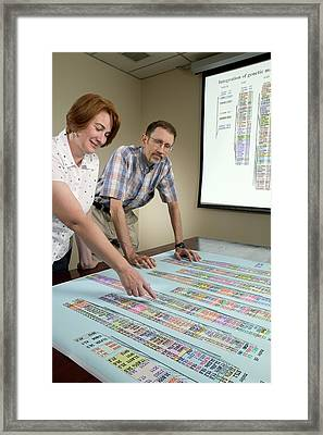 Red Flour Beetle Genome Research Framed Print by Peggy Greb/us Department Of Agriculture