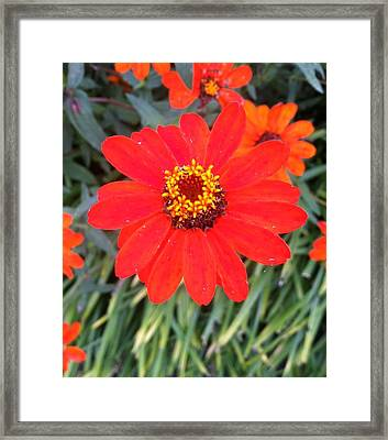 Red Flower Framed Print by Hannah  Van Pelt