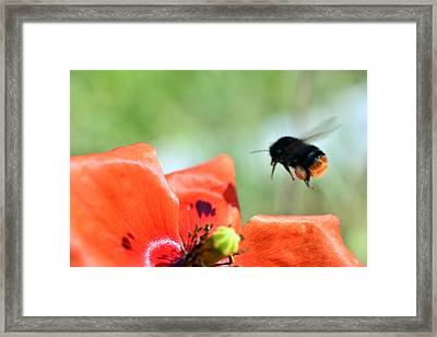 Red Flower Macro Framed Print by Toppart Sweden