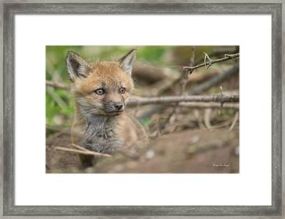 Red Fox Kit Framed Print by Everet Regal