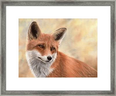 Red Fox Painting Framed Print by Rachel Stribbling