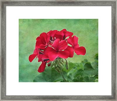 Red Geranium Flowers Framed Print by Kim Hojnacki