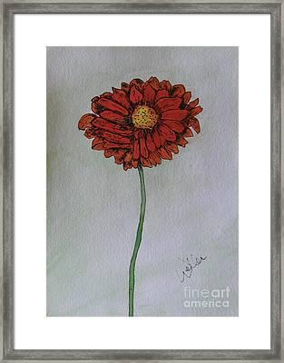 Red Gerbera Framed Print by Marcia Weller-Wenbert