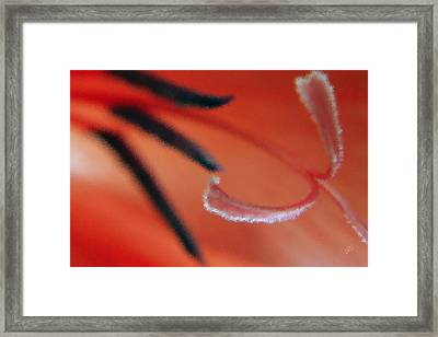 Red Gladiolus Abstract Framed Print by Ben and Raisa Gertsberg