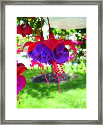 Red Hats Framed Print by Patti Whitten