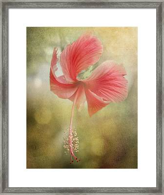 Red Hibiscus Framed Print by David and Carol Kelly