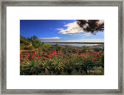 Red Hot Aloes Framed Print by English Landscapes