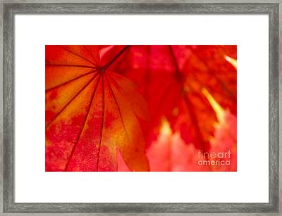 Red Hot Framed Print by Anne Gilbert