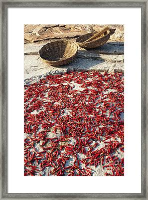 Red Hot Chilli Peppers Framed Print by Tim Gainey