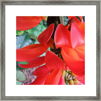 Red Jade Flowers Framed Print by Mary Deal