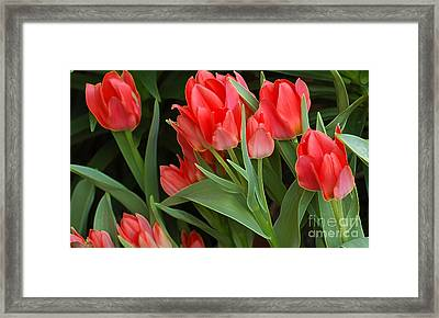 Red Ladies Framed Print by Kathleen Struckle