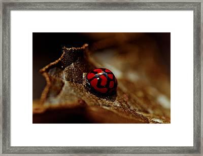 Red Lady Bug Framed Print by Isabel Laurent