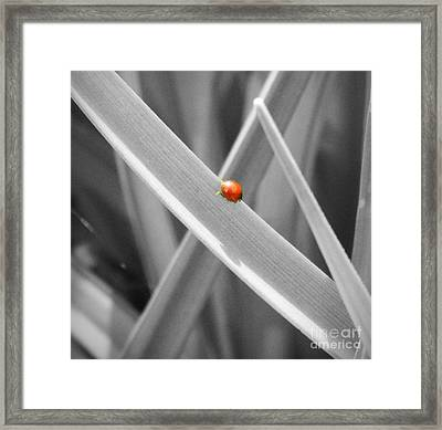 Red Ladybird Framed Print by Chalet Roome-Rigdon
