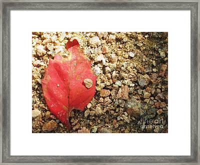 Red Leaf Framed Print by Venus