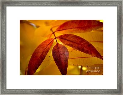 Red Leaves At Dawn Framed Print by Deb Halloran