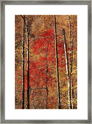 Red Leaves Framed Print by Patrick Shupert