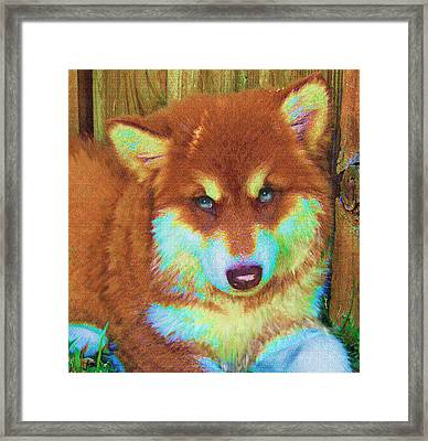 Red Malamute Framed Print by Jane Schnetlage