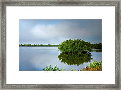 Red Mangrove Marsh I Framed Print by Steven Ainsworth