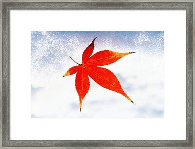 Red Maple Leaf Against White Background Framed Print by Panoramic Images