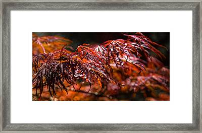 Red Maples Framed Print by Karen Wiles