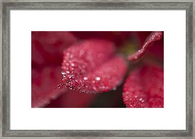 Red Framed Print by Mariola Szeliga