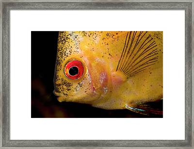 Red Melon Discus Framed Print by Nigel Downer