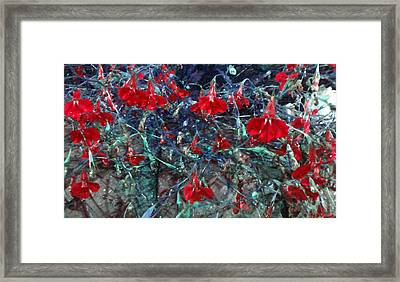Red Mountain Flowers Framed Print by Diana Burlan