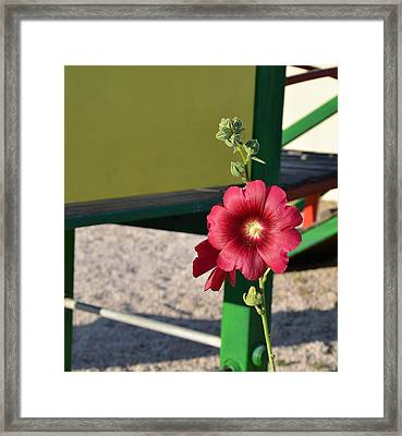 Red On Green Framed Print by Corinne Rhode