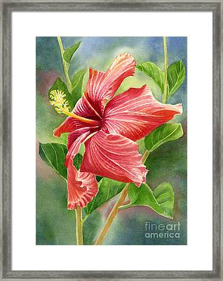 Red Orange Hibiscus With Background Framed Print by Sharon Freeman