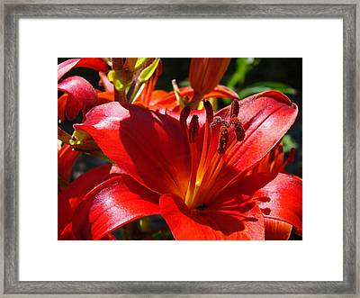 Red Orange Lily Flowers Art Prints Framed Print by Baslee Troutman