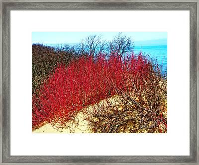 Red Osier Dogwood Framed Print by Gary Richards